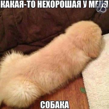 http://sd.uploads.ru/t/y6M4E.jpg