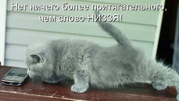 http://sd.uploads.ru/t/zT84q.jpg