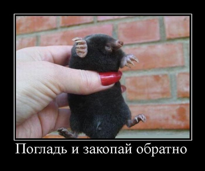 http://sd.uploads.ru/tPG8f.jpg