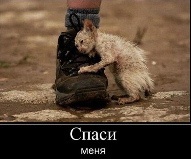 http://sd.uploads.ru/zu5XI.jpg