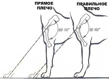 http://sd.uploads.ru/GRtQk.jpg