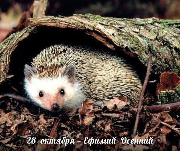 http://sd.uploads.ru/dAsrH.jpg