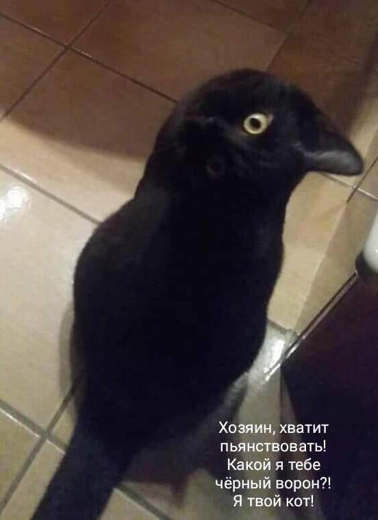 http://sd.uploads.ru/ha64Y.jpg