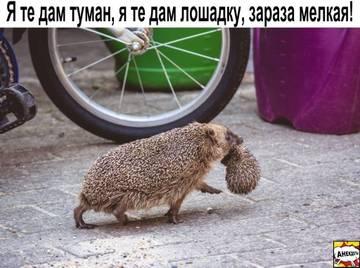 http://sd.uploads.ru/t/B6DLj.jpg