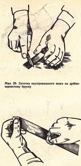 http://sd.uploads.ru/t/E5uHf.png
