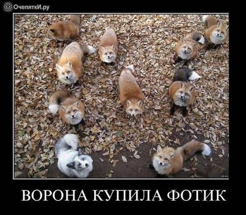 http://sd.uploads.ru/t/NgIRb.jpg