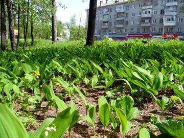 http://sd.uploads.ru/t/R51l8.jpg