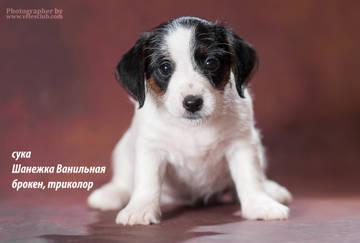 http://sd.uploads.ru/t/RXdjM.jpg