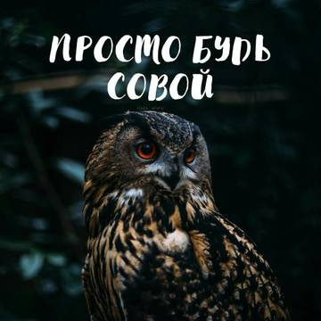 http://sd.uploads.ru/t/ceDBo.jpg