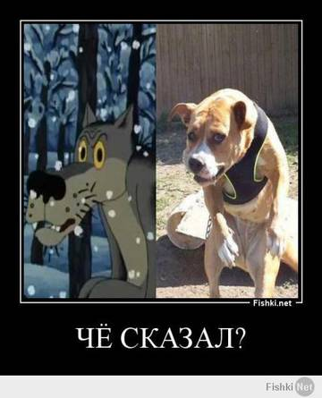 http://sd.uploads.ru/t/nMycX.jpg