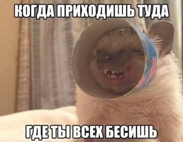 http://sd.uploads.ru/t/tNfW1.jpg