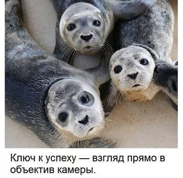 http://sd.uploads.ru/t/uhd2m.jpg