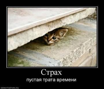 http://sd.uploads.ru/t/yCbuA.jpg